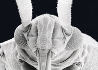Electron Microscope Scan of Insect
