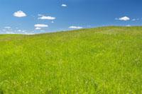 Green Grass and Blue Sky 11030004290| 写真素材・ストックフォト・画像・イラスト素材|アマナイメージズ