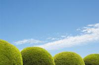 Round Hedges and Blue Sky 11030004296| 写真素材・ストックフォト・画像・イラスト素材|アマナイメージズ