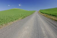 Gravel Road through Wheat Fields