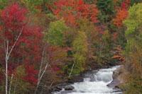 Brook in Forest in Autumn 11030004941| 写真素材・ストックフォト・画像・イラスト素材|アマナイメージズ