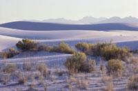 White Sands New Mexico 11030005236| 写真素材・ストックフォト・画像・イラスト素材|アマナイメージズ