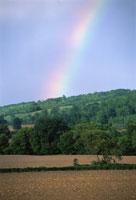 Rainbow over Field and Trees 11030007538| 写真素材・ストックフォト・画像・イラスト素材|アマナイメージズ