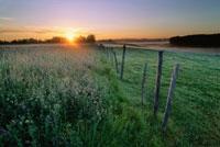 Clover Field at Dawn