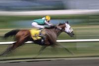 Horse Race 11030016750| 写真素材・ストックフォト・画像・イラスト素材|アマナイメージズ