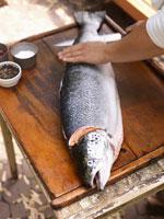 Person Filleting Fish 11030019337| 写真素材・ストックフォト・画像・イラスト素材|アマナイメージズ