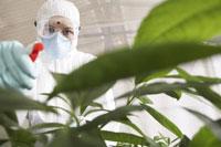 Scientist in Greenhouse 11030021169| 写真素材・ストックフォト・画像・イラスト素材|アマナイメージズ