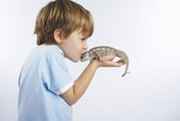 Boy Holding Lizard 11030023646| 写真素材・ストックフォト・画像・イラスト素材|アマナイメージズ