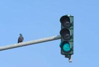 Traffic Light,Frankfurt,Hesse,Germany