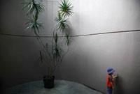 Boy near Plant 11030027115| 写真素材・ストックフォト・画像・イラスト素材|アマナイメージズ