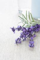 Lavender Flowers 11030027521| 写真素材・ストックフォト・画像・イラスト素材|アマナイメージズ