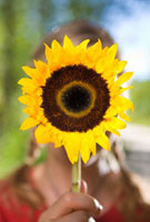 Woman Holding a Sunflower,Steamboat Springs