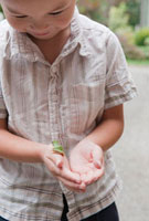 Boy Holding Frog 11030028699| 写真素材・ストックフォト・画像・イラスト素材|アマナイメージズ