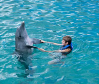Swimming with Dolphin,Mexico
