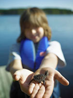 Boy holding Baby Snapping Turtle,Cache Lake,Algonquin Park
