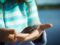 Girl holding Baby Snapping Turtle,Cache Lake,Algonquin Par