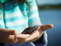 Girl holding Baby Snapping Turtle,Cache Lake,Algonquin Par 11030029840| 写真素材・ストックフォト・画像・イラスト素材|アマナイメージズ
