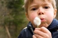 Boy Blowing on Dandelion, Salzburg, Salzburger Land, Austria 11030030913| 写真素材・ストックフォト・画像・イラスト素材|アマナイメージズ