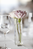 Roses in Vase and Wine Glass, Toronto, Ontario, Canada