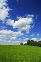 Meadow and Cumulonimbus Clouds, Holzkirchen, Bavaria, German