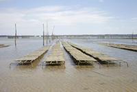 Oyster Beds at Low Tied, Cap Ferret, Gironde, Aquitaine, Fra