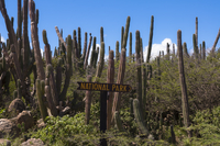 National Park Sign and Cacti, Arikok National Park, Aruba, L