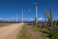 Wind Turbines and Cactus by Dirt Road, Aruba, Lesser Antille