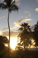 Sunset and Palm Trees in Wailea Maui Hawaii