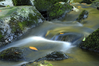 Detail of flowing waters of a little River in autumn in the  11030037465| 写真素材・ストックフォト・画像・イラスト素材|アマナイメージズ