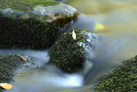 Detail of flowing waters of a little River in autumn in the  11030037466| 写真素材・ストックフォト・画像・イラスト素材|アマナイメージズ