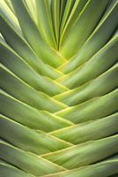 Detail of Suculant Plant, Studio Shot