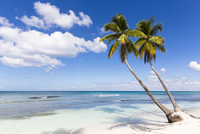 Coconut palm trees and white beach by turquoise water, Parque Nacional del Este, Dominican Republic, Caribbean
