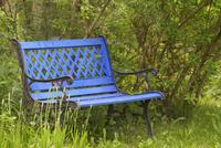 Blue Park Bench in Garden, Village of Born auf dem Darss, Darss, Fischland-Darss-Zingst, Mecklenburg-Western Pomerania, Germany