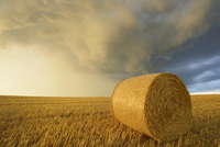 Straw rolls on stubblefield and rain clouds, Hesse, Germany, Europe