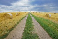 Field road through stubble field with straw rolls and rain clouds, Hesse, Germany, Europe