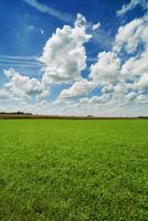 Agricultural Landscape and Cumulonimbus Clouds, Freising, Upper Bavaria, Bavaria, Germany