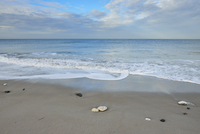 Shells on sandy beach with surf at low tide, Helgoland, Germany 11030042359| 写真素材・ストックフォト・画像・イラスト素材|アマナイメージズ