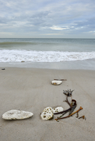 Shells and seaweed on sandy beach with surf at low tide, Helgoland, Germany
