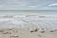 Seaweed and shells on sandy beach with surf at low tide, Helgoland, Germany