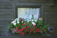 Close-up of Summerhouse Window with Flowers in Early Summer, Bavaria, Germany