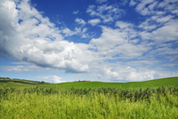 Agricultural landscape and cumulus clouds on a sunny afternoon, Val d'Orcia, Siena, Tuscany, Italy