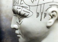 Close-up of Phrenology Mannequin