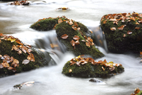 Detail of moss covered rocks and flowing waters of a river in autumn, Bavarian Forest National Park, Bavaria, Germany