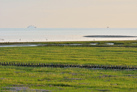 Marshland with North Sea and Ships at sunset, Norderney, East Frisia Island, North Sea, Lower Saxony, Germany