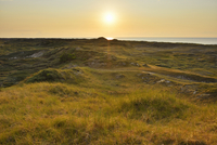 View over Dunes at Sunset, Norderney, East Frisia Island, North Sea, Lower Saxony, Germany