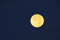 Full Harvest Moon in Night Sky, Saintes-Maries-de-la-Mer, Camargue, Bouches-du-Rhone, Provence-Alpes-Cote d'Azur, France