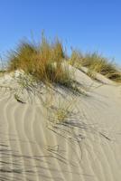 Sand Dune by Mediterranean Sea, Saintes-Maries-de-la-Mer, Camargue, Bouches-du-Rhone, Provence-Alpes-Cote d'Azur, France