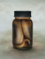 Snake Preserved in a Jar