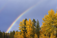Rainbow and Mixed Forest in Autumn, Grand Teton National Park, Jackson, Wyoming, USA