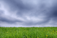 Meadow with Dandelions (Taraxacum officinale) and Dramatic Sky, Bavaria, Germany